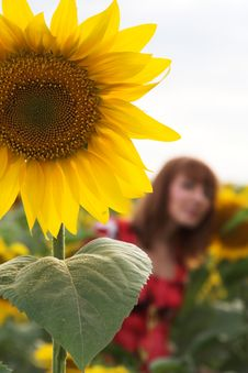 Free Sunflower And The Girl Royalty Free Stock Photos - 2945288