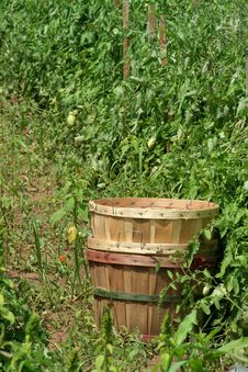 Free Tomatoe Baskets In The Field Stock Images - 2945364