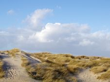 Free Lyme Grass At A Dune Stock Images - 2948224