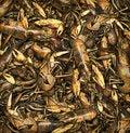 Free Crayfish Royalty Free Stock Photo - 29408985
