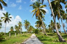 Free Road Under The Palm Royalty Free Stock Images - 29405099