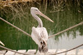Free Pelican Sitting On The Rope Stock Photos - 29412683
