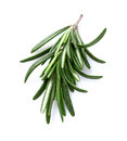 Free Rosemary In Closeup Royalty Free Stock Photography - 29418227
