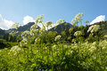 Free Wildflowers Grow Under A Snow-capped Mountain. Royalty Free Stock Photography - 29419467