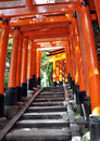 Free Tunnel Of Thousand Torii Gates In Fushimi Inari Shrine, Kyoto Royalty Free Stock Image - 29419556