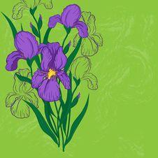 Free Purple Iris Flower Stock Images - 29414534
