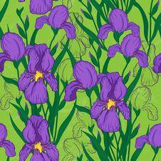 Iris Flower Royalty Free Stock Image