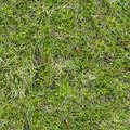 Free Grass Texture. Royalty Free Stock Images - 29422339