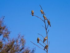 Free Finches Royalty Free Stock Photos - 29421568