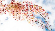 Sakura Flowers Blooming Blossom Stock Photography