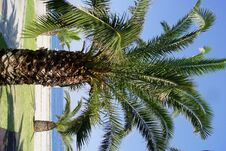 Free Palms Royalty Free Stock Image - 29443326