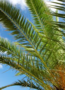 Free Palm Tree Against The Sky Stock Photography - 29445852