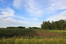 Free Blue Sky With Clouds Above The Potato A Field. Royalty Free Stock Image - 29453546
