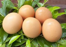 Free Eggs In The Leaves. Royalty Free Stock Photo - 29454665