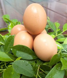 Free Eggs In The Leaves. Royalty Free Stock Images - 29454839