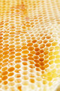 Free Honeycomb Royalty Free Stock Photos - 29460448