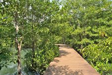 Free Wood Bridge In Mangrove Forest Stock Photos - 29461413
