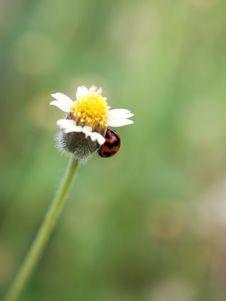 Free Ladybug Stock Images - 29462074