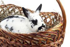 Free Rabbit Stock Image - 29466001