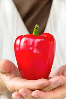 Free Hand Holding Sweet Pepper Royalty Free Stock Photo - 29478065