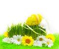 Free Easter Egg Background Wooden Card Spring Flower Grass Stock Images - 29481214