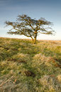 Free Single Tree Royalty Free Stock Images - 29482949