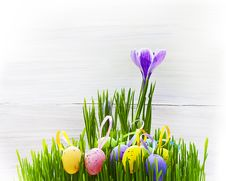 Free Easter Egg Background Wooden Card Spring Flower Grass Stock Photos - 29481103