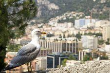 Free Albatross Against Monaco. Stock Photos - 29481143