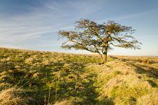 Free Moorland Tree Royalty Free Stock Photo - 29482945