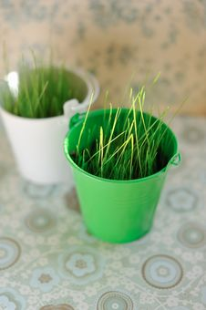 Free Grass In Pots Stock Images - 29484274