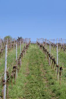 Free Vineyard In Spring Royalty Free Stock Image - 29484536