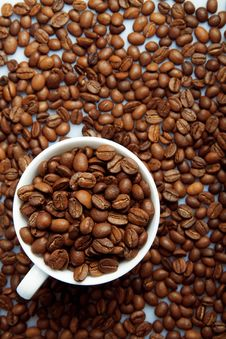 Free Coffee Beans Background With White Cup Stock Images - 29489764