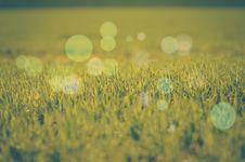 Free Green Grass Stock Photo - 29492380