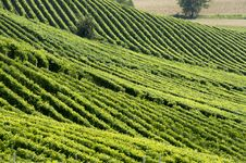 Free Hills With Vineyards Stock Photography - 29494082
