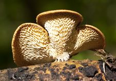 Mushrooms-vermin Royalty Free Stock Photos