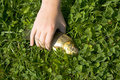 Free Fish On The Grass Royalty Free Stock Image - 2954826