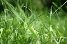 Free Grass Royalty Free Stock Photo - 2951695