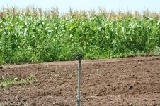 Free Crop Sprinkler Stock Photography - 2951712