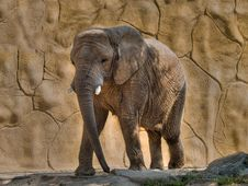 Free Elephant Royalty Free Stock Image - 2952316
