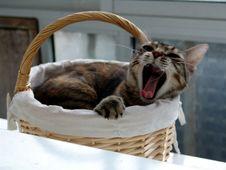 Free Mikas Royalty Free Stock Image - 2952736