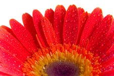Free Flower Background Texture Royalty Free Stock Images - 2952999