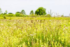 Motley Grass Field Stock Images