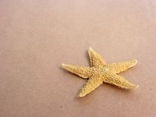 Free Starfish Stock Photo - 2953630