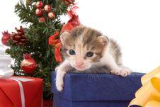 Free Striped Kitten Christmas Tree Royalty Free Stock Image - 2954336