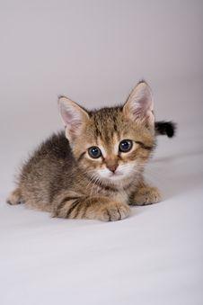Free Striped Kitten Lying Down Stock Photos - 2954803