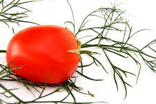 Free Tomato Stock Photography - 2958772