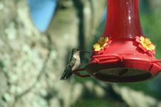Free Hummingbird Stock Photos - 2959383