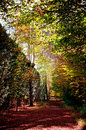 Free Way Of The Forest Between The Trees Of Intense Colors Stock Photos - 29502553