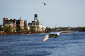 Free A Seagull Is Flying In Newark, Nj Royalty Free Stock Images - 29503679