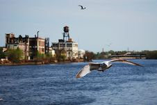 A Seagull Is Flying In Newark, Nj Royalty Free Stock Images